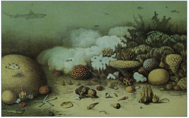 Coral bleaching, lithograph, 1862.
