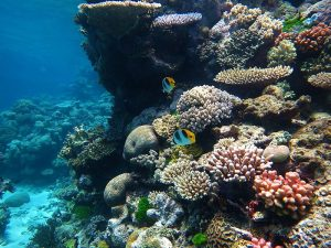 Corals, Fish, at Flynn Reef, Great Barrier Reef, Photo.