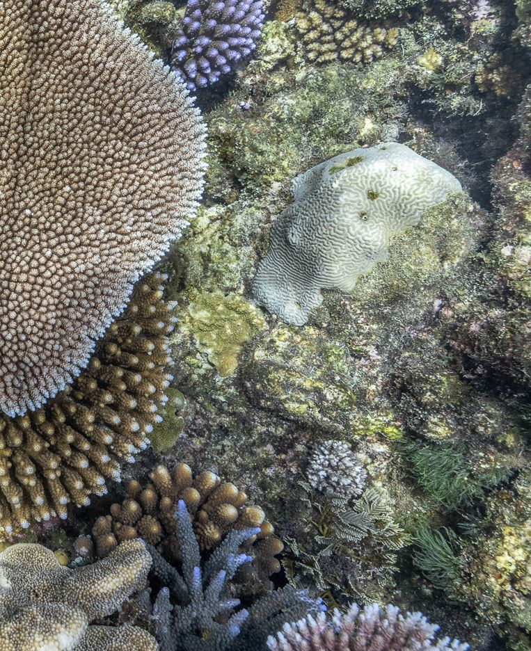 Pixie Reef coral photos, Jennifer Marohasy, 2021